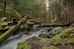 Log Jam at Panther Creek Falls in Washington State Royalty Free Stock Photos