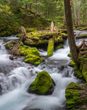 Log Jam on Panther Creek. A small moss covered logjam on Panther Creek creates a lovely waterfall.   Panther Creek Falls is near the Columbia Gorge in Washington Stock Image