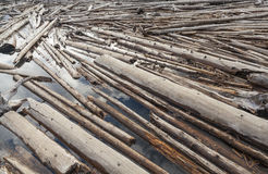 Log Jam of Tree Trunks Floting on a River. Tree trunks floating on a river creating a log jam Stock Photography