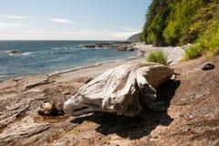 Log at Juan de Fuca trail Royalty Free Stock Image