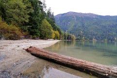 Log on a lake beach Stock Image