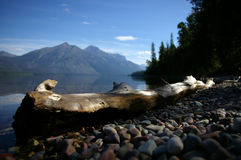 Log by lake macdonald. A beautiful log sitting by the picturesque lake macdonald in glacier national park stock images