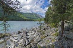 Log on the lake shore. Kucherla lake. Altai Mountains, Russia. Royalty Free Stock Images