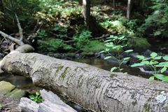 Log laying across a small stream. A fallen tree is laying across a small strewn in the woods Stock Photos