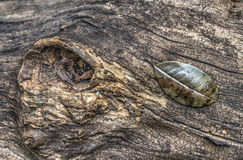 Log and leaves Royalty Free Stock Image