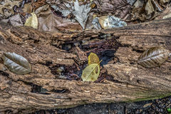 Log and leaves Royalty Free Stock Images