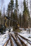 Log loader cutting tree in winter forest Royalty Free Stock Photos