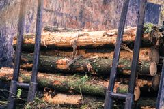 Log loader machine felled in a Galician forest. stock photography
