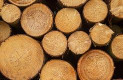 Log lumber timber tree round ring pine spruce tree-ring detail Royalty Free Stock Image