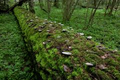 Log lying moss covered Stock Photography