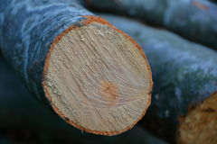 Log macro. Chopped loggs in forest on pile Royalty Free Stock Images
