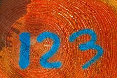 Log marcado de um pinheiro fotografia de stock