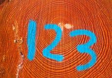 Log marcado de um pinheiro imagens de stock