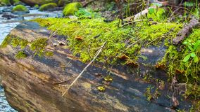 Log and moss stock video footage