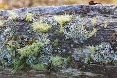 Log with moss and lichens Royalty Free Stock Photos