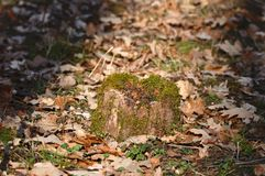 Log with moss stock photography