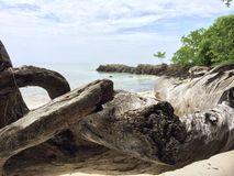 Log near the beach. Beautiful view of the sea and beach in Thailand (kohlipe Royalty Free Stock Photo