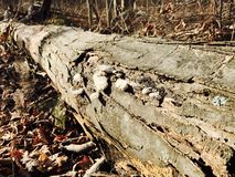 Log. New York Nature Royalty Free Stock Images