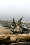 Log on the ocean coast, La Push beach Royalty Free Stock Photography