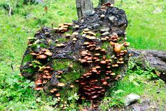 Log overgrown with mushrooms Royalty Free Stock Photography