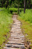 Log path. The log foot path lay on the muddy ground to help people able to walk smooth in the forest of The Sai Thong National Park , Chaiyaphum,Thailand Royalty Free Stock Photo