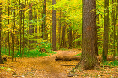 Log on the path in the forest Royalty Free Stock Photography