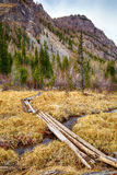 Log-path ower swamp in Altay tajga Royalty Free Stock Photos