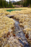 Log-path ower swamp in Altay tajga Stock Image