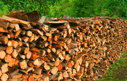 Log pile Stock Image