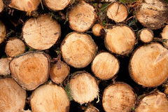 Log Pile Royalty Free Stock Photos