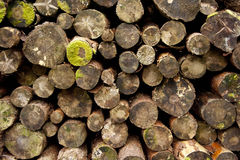 Log Pile. A pile of sawn pine logs Royalty Free Stock Image