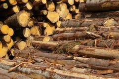 Log Pile. Piles of timber cut into logs stock photography