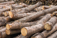 Log Pile. Pile of freshly cut logs royalty free stock photo