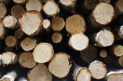 Log pile. Texture Royalty Free Stock Images