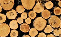 Log pile background Royalty Free Stock Photo