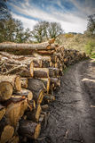 Log Pile on country track Royalty Free Stock Photography