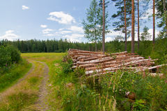 Log pile in countryside Royalty Free Stock Photo