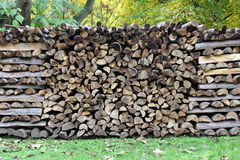 Log pile in the autumn forest - autumn background royalty free stock photo