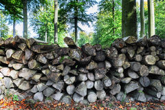 Log pile in the forest. Industrial concept Royalty Free Stock Photos