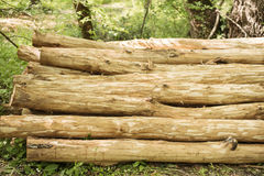 Log pile in the forest. Wood stack. Close up Stock Image