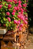 Log pile and geraniums Stock Images