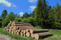 Log pile. A load of loggs waiting to be loaded Stock Photography