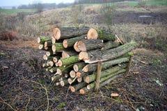 Log Pile Royalty Free Stock Photos