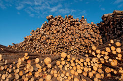 Log pile, Saguenay Royalty Free Stock Images