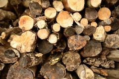 Log pile with some freshly cut wood Royalty Free Stock Photos