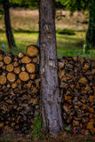 Log pile. In south of france Royalty Free Stock Images