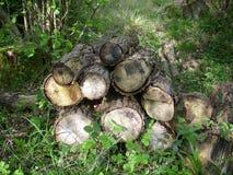 Log pile for wildlife Stock Photo