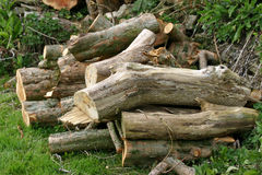 Log pile for wildlife or fuel Royalty Free Stock Photos