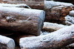 Log Pile with Winter Frost and snow Royalty Free Stock Image
