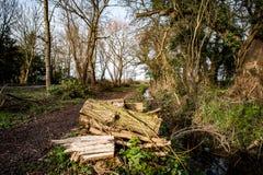 Log pile in woodland Stock Photos